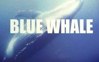 Blue Whale, Anche a Reggio Calabria presunta partecipazione al gioco suicida