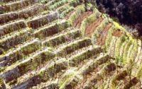 UNESCO: I muretti a secco della Costa Viola nel Patrimonio dell'Umanità