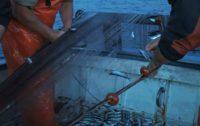 PESCA Il Flag dello Stretto pubblica i Bandi per rafforzare il ruolo dei pescatori. Intanto firmate le Convenzioni