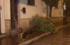 SCILLA Il forte vento abbatte albero di oleandro